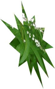 erba-luigia